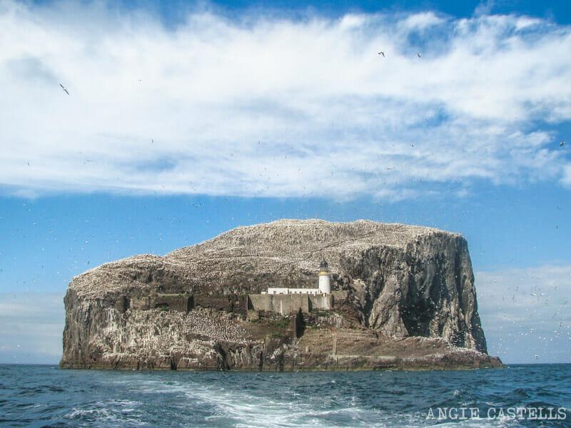 Barco Bass Rock North Berwick Excursion desde Edimburgo