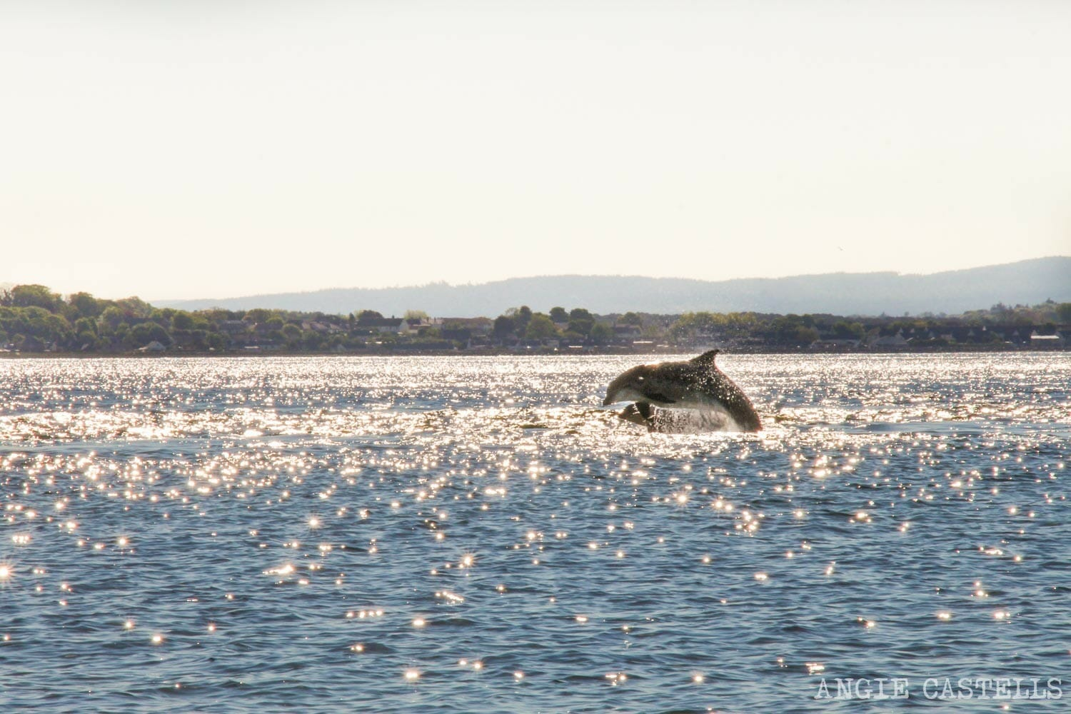 Ver delfines Escocia Chanonry Point excursion desde Inverness
