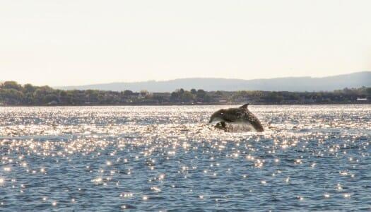 Chanonry Point, delfines en Escocia muy cerca de Inverness